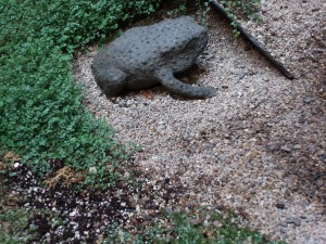 Toad in Courtyard